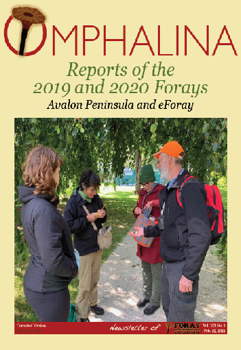 Foray Report 2019